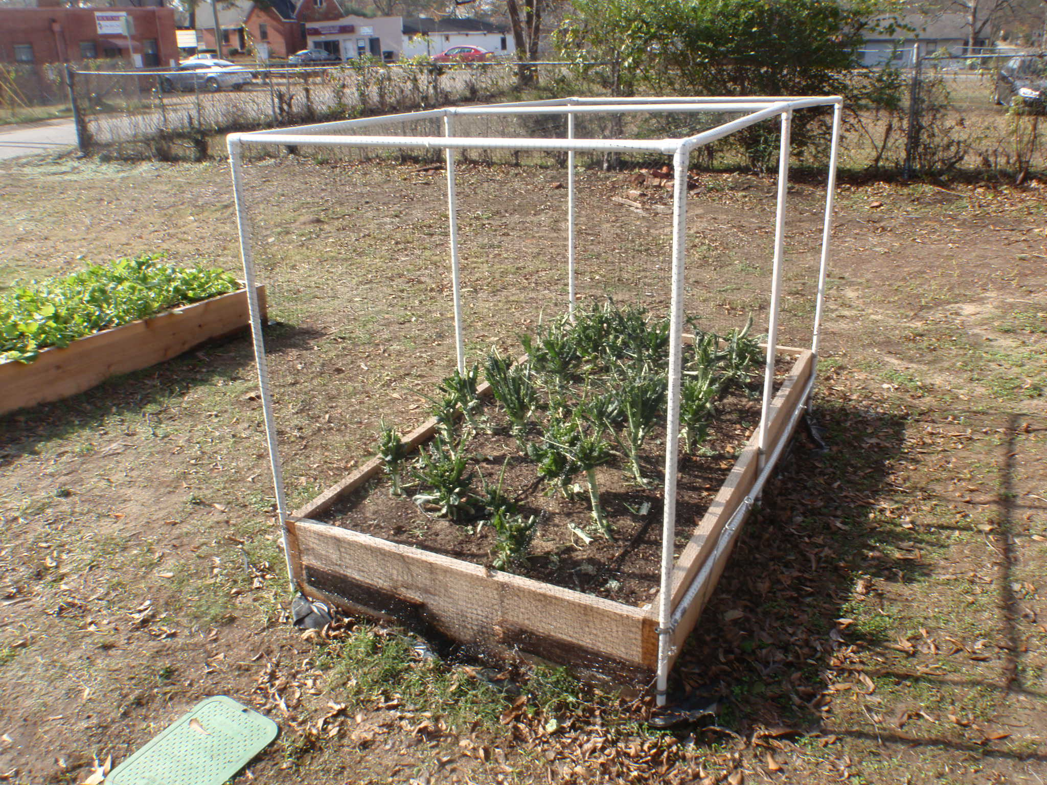 Community Gardens Stay Busy All Year Long - The Wellness Coalition