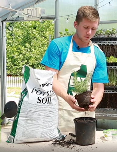 man in a nursery apron with a bag of potter soil planting a small plant in a nursery
